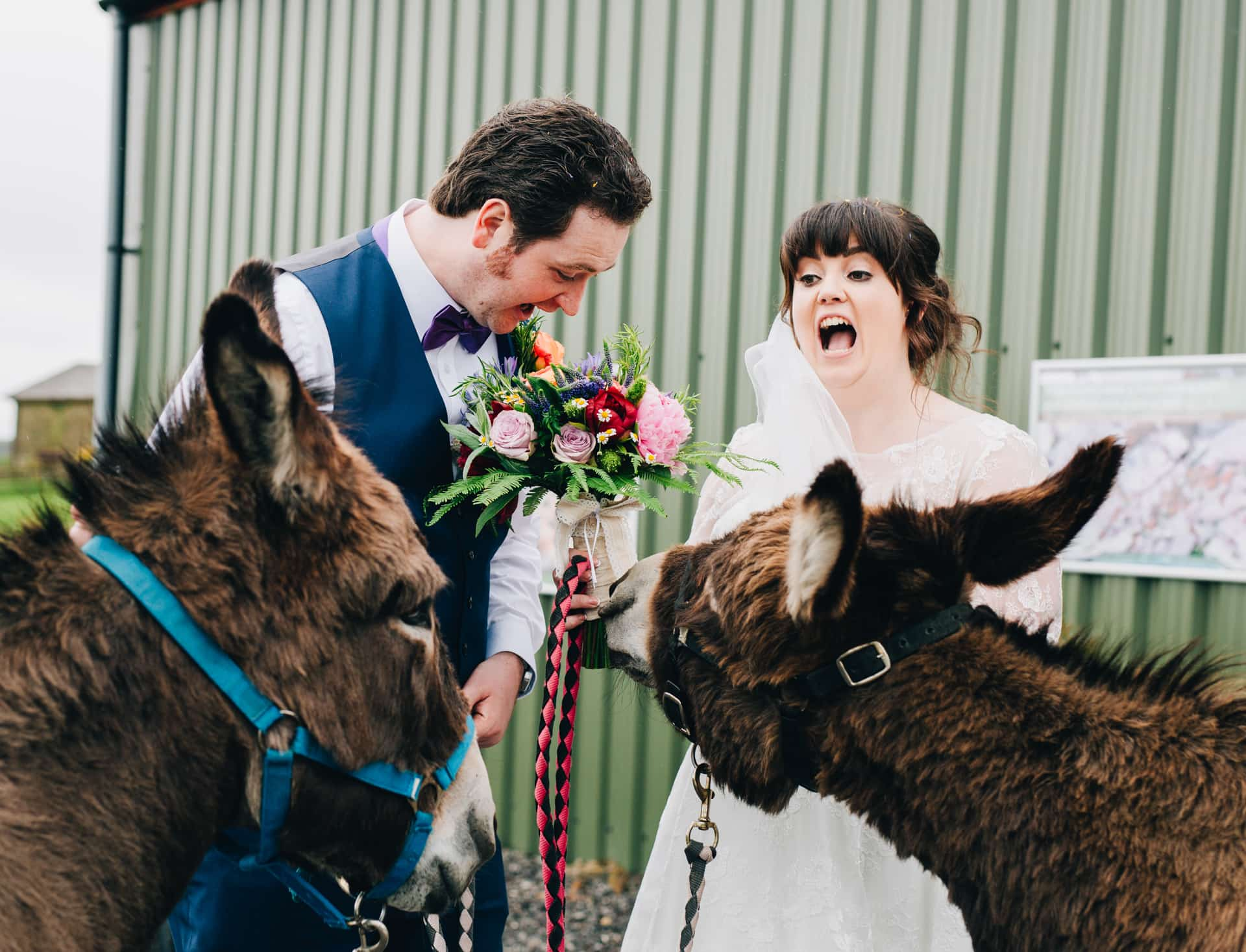 Wellbeing Farm Wedding - the donkeys