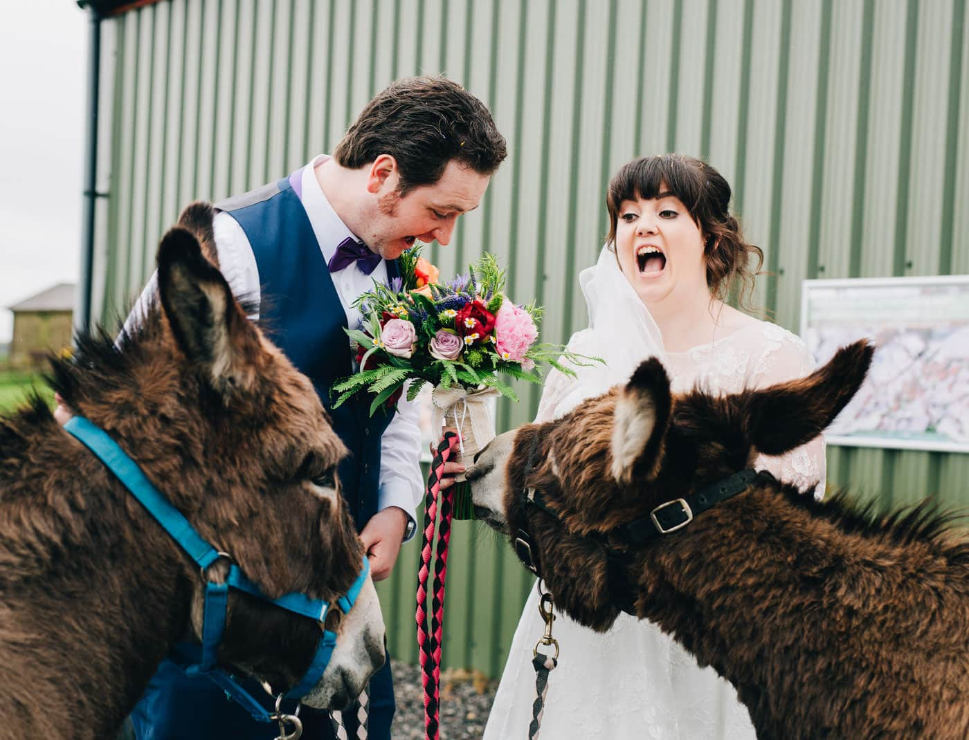 Donkeys at Wellbeing Farm wedding